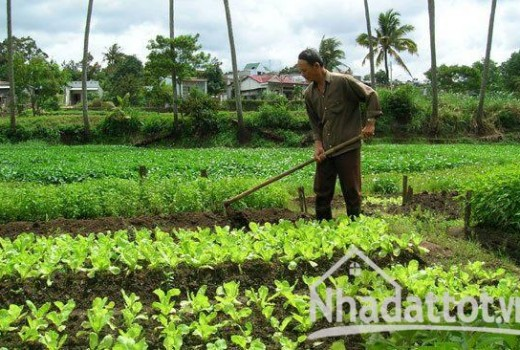 Thí điểm cho Củ Chi và Cần Giờ được xây dựng trên đất nông nghiệp